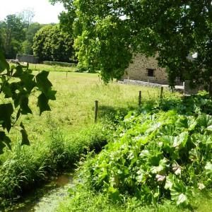 Atelier : Cuisine des plantes sauvages et comestibles