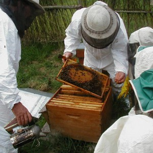 Un mardi à la campagne en famille : La récolte de miel