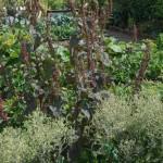 jardin JB