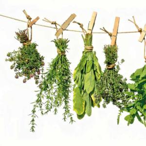 Jardinons au naturel : les plantes médicinales et aromatiques